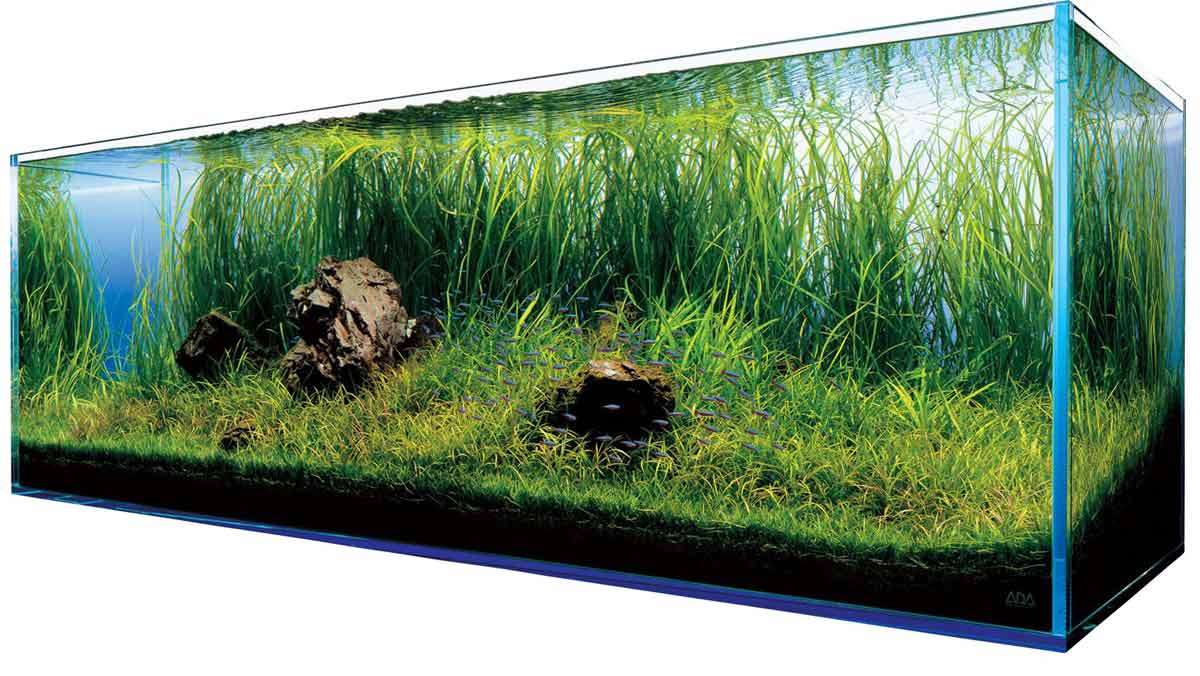 Akwarium w domu - Zdjęcie główne