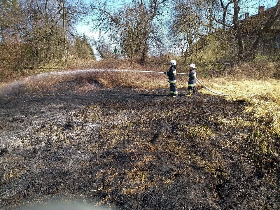 Pożar traw w gminie Przecław! [FOTO] - Zdjęcie główne