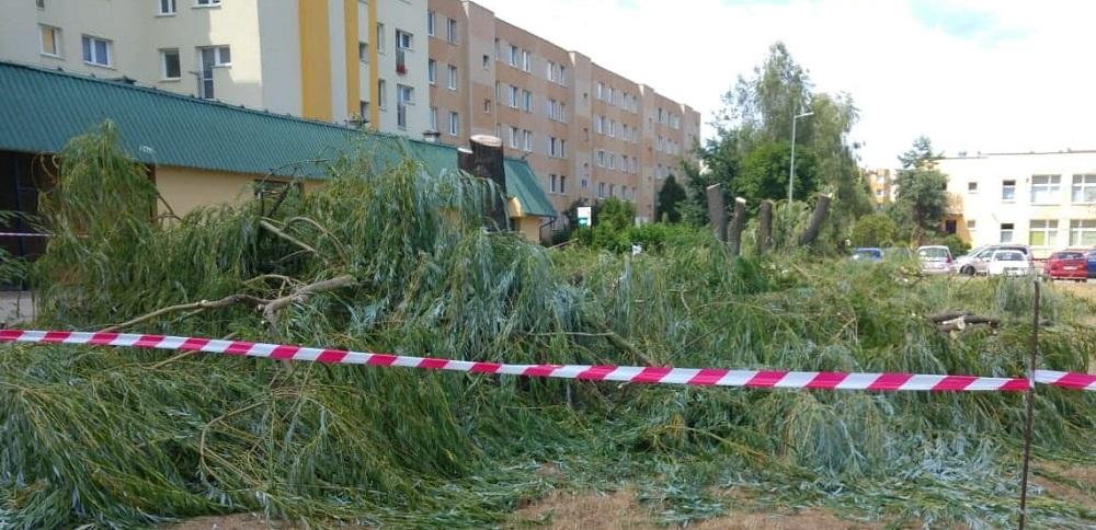 """""""Drzewa na ryneczku (osiedle Szafera) stanowiły zagrożenie dla przechodniów"""" - pisze magistrat  - Zdjęcie główne"""