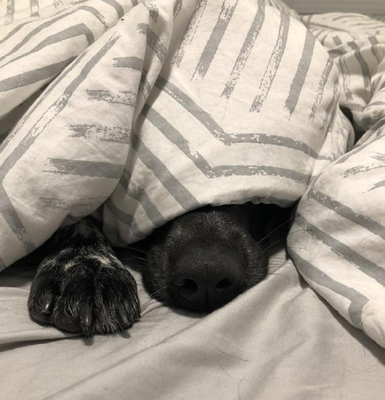 Mielecka Straż Ochrony Zwierząt apeluje o opiekę nad psami - Zdjęcie główne