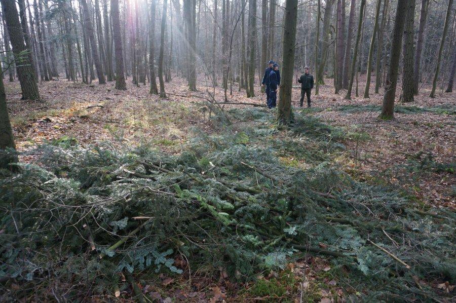 Wywieźli go do lasu, pobili i okradli - Zdjęcie główne