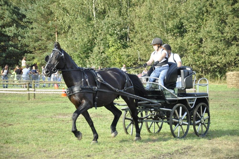 Konie, kucyki i  bryczki. Parada Konna w Żarówce za nami [FOTO] - Zdjęcie główne