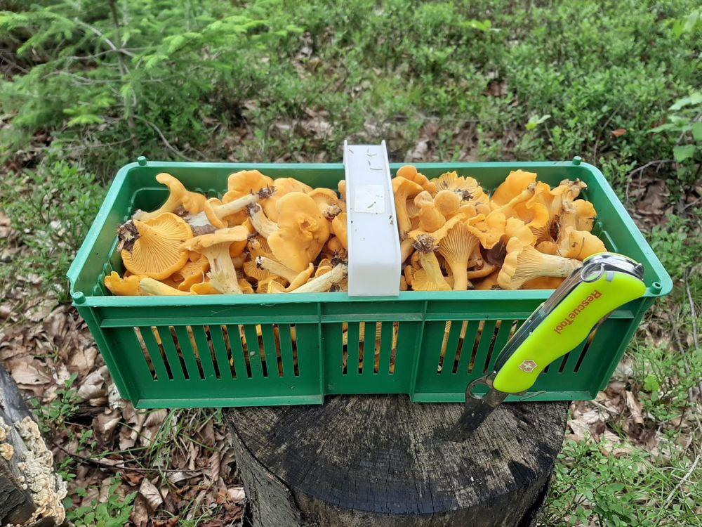 Trujący czy jadalny? Wysyp grzybów w podkarpackich lasach - Zdjęcie główne
