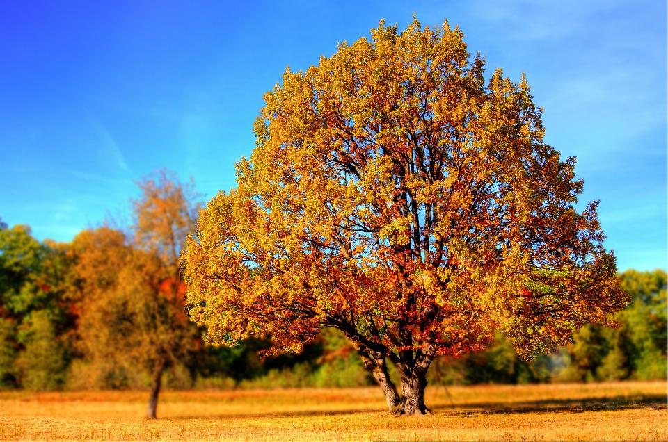 Jutro oficjalnie przywitamy jesień - Zdjęcie główne