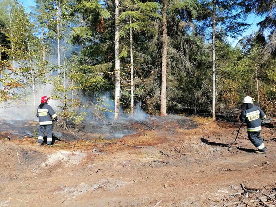 Pożar lasu w okolicy Biały Bór! Trwa akcja gaśnicza - Zdjęcie główne
