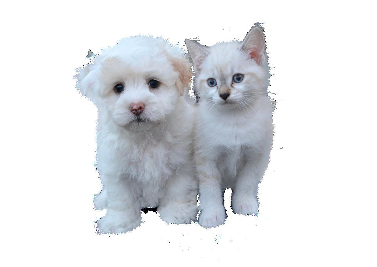 W gminie sfinansują sterylizację kotów i psów - Zdjęcie główne