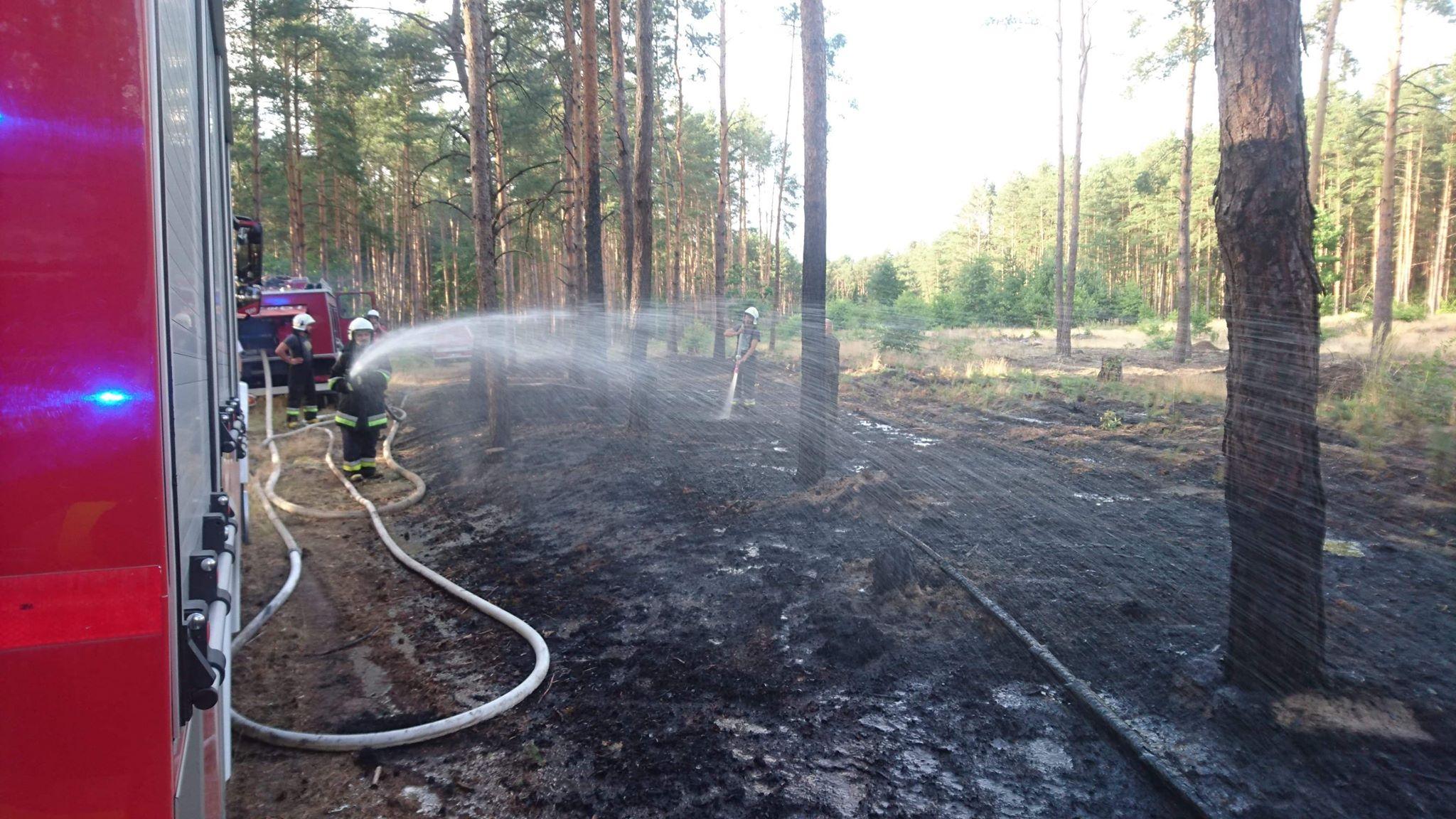 Kolejny pożar lasu - Zdjęcie główne