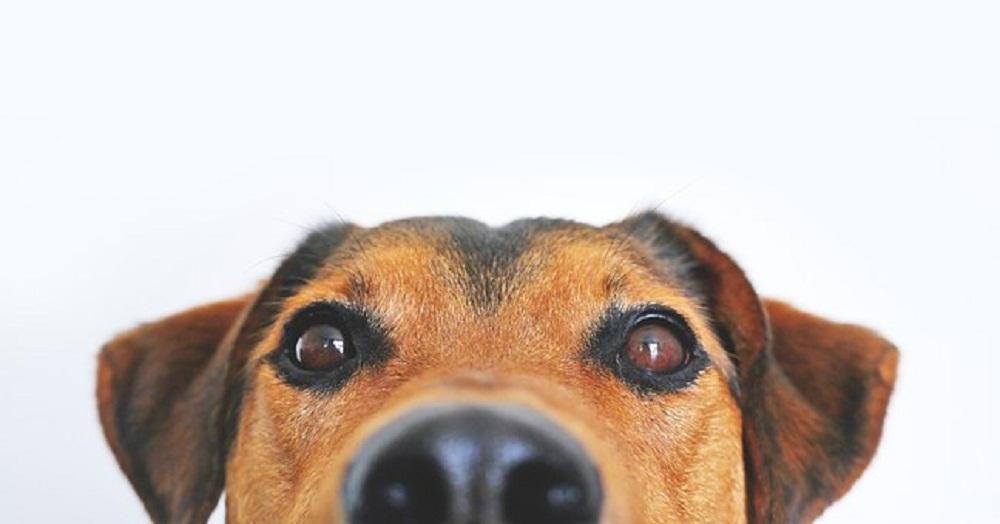 Pies znalazł sprawców włamania. Łupy nadal zaginione - Zdjęcie główne