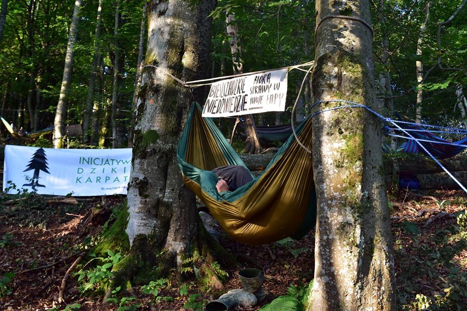 Bronią drzew.  Śpią w hamakach - Zdjęcie główne