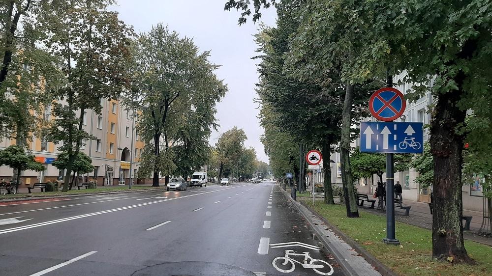 Jest wniosek o wycinkę drzew na al. Niepodległości!  - Zdjęcie główne