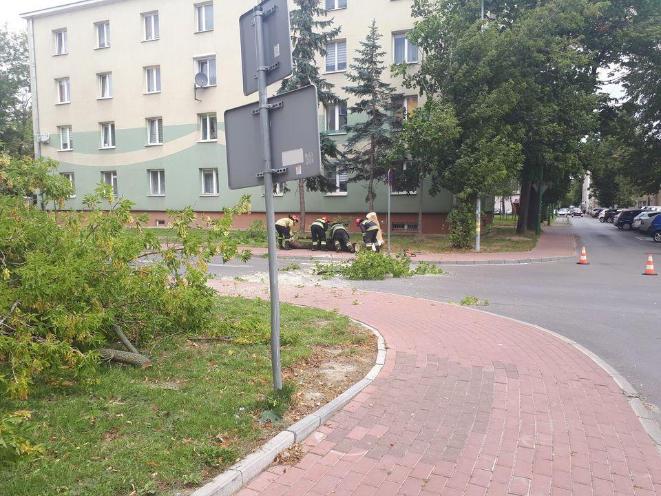 Strażacy wycięli niebezpiecznie pochylone drzewo [FOTO] - Zdjęcie główne