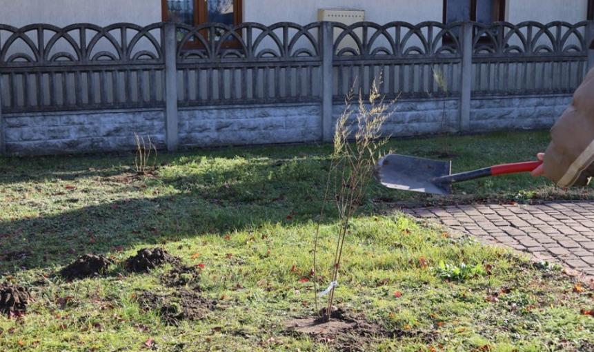 Sadzenie drzewek w Gminie Tuszów Narodowy  - Zdjęcie główne