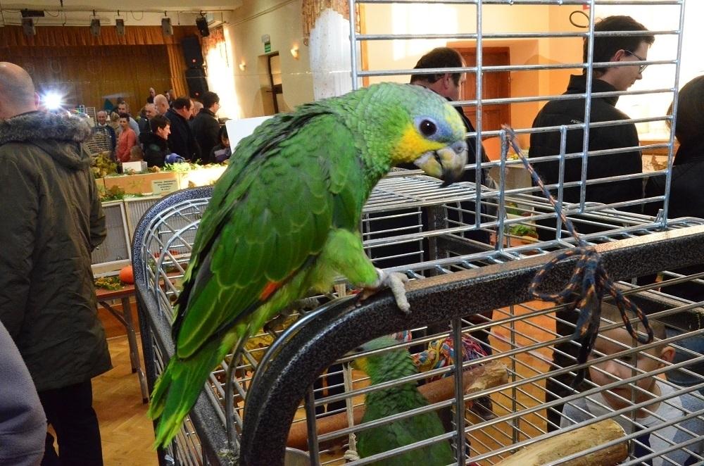Egzotyczne ptaki ponownie w Chorzelowie - Zdjęcie główne