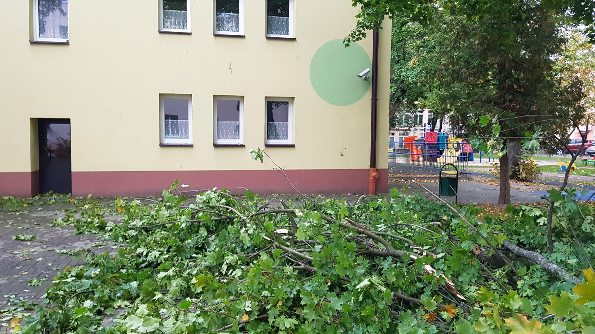 Sytuacja po wichurze w Mielcu: konary spadają na ulice  - Zdjęcie główne