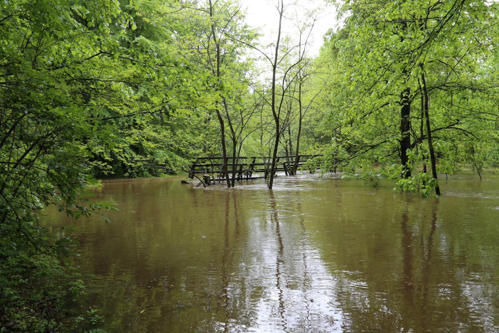 Powódź w lasach - Zdjęcie główne