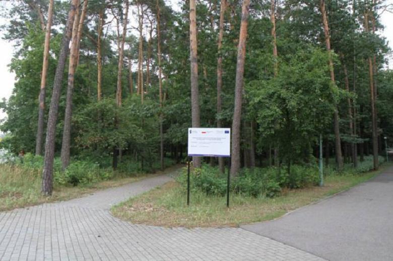 Ścieżka dla mieszkańców, budki dla ptaków. Remont w Parku Leśnym dobiega końca  - Zdjęcie główne