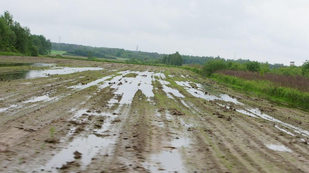 Starostwo w Mielcu interweniuje w sprawie komarów!  - Zdjęcie główne