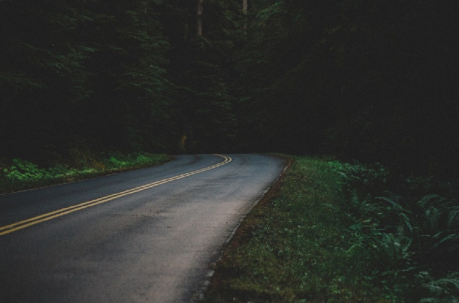 Z PODKARPACIA. 84-latka błądziła całą noc w lesie - Zdjęcie główne