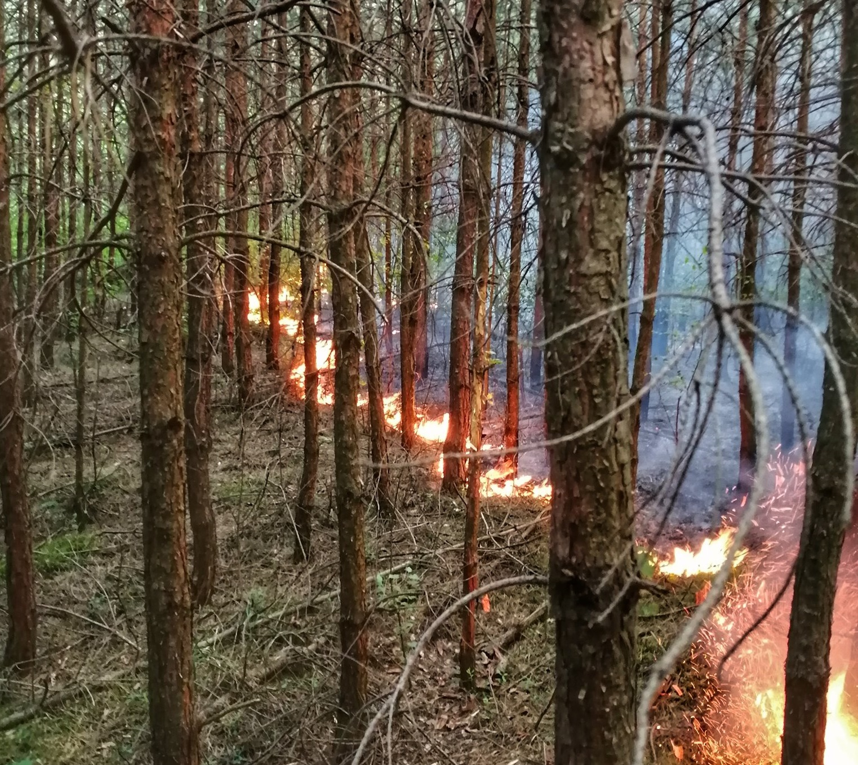Ogień w lesie! [ZDJĘCIA] - Zdjęcie główne