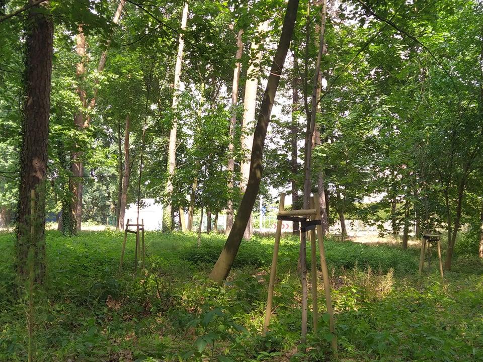 Prace w parku kosztowały półtora miliona.  A część drzew nie przetrwała zimy - Zdjęcie główne