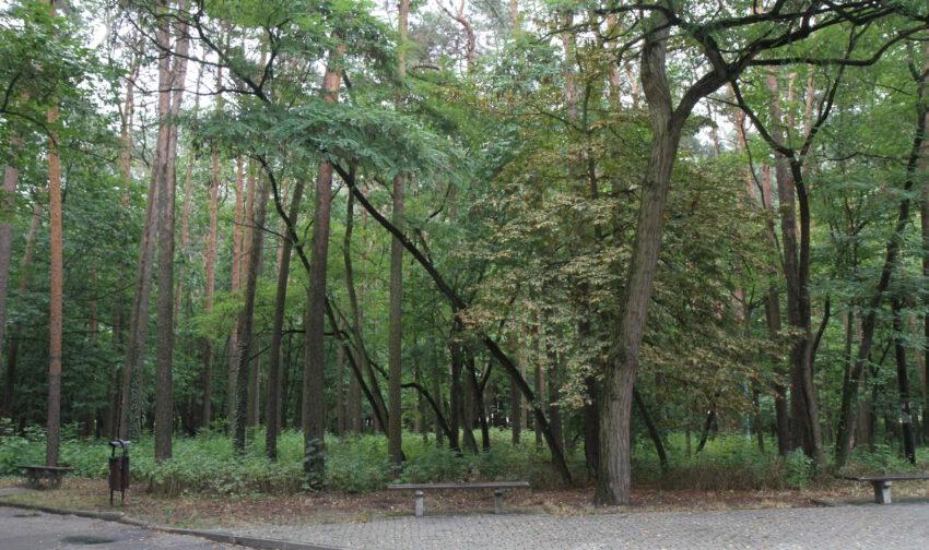 """Park leśny do """"naprawy"""" - Zdjęcie główne"""