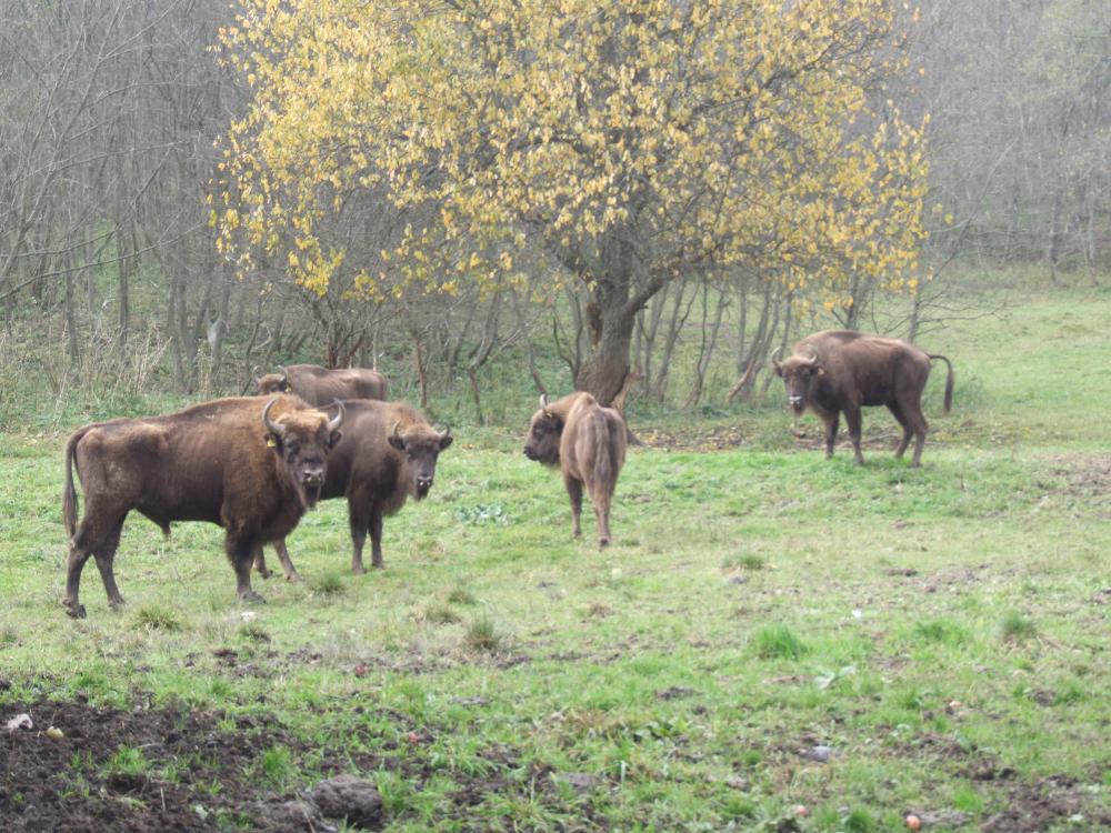 Ile zwierząt kryją podkarpackie lasy? - Zdjęcie główne