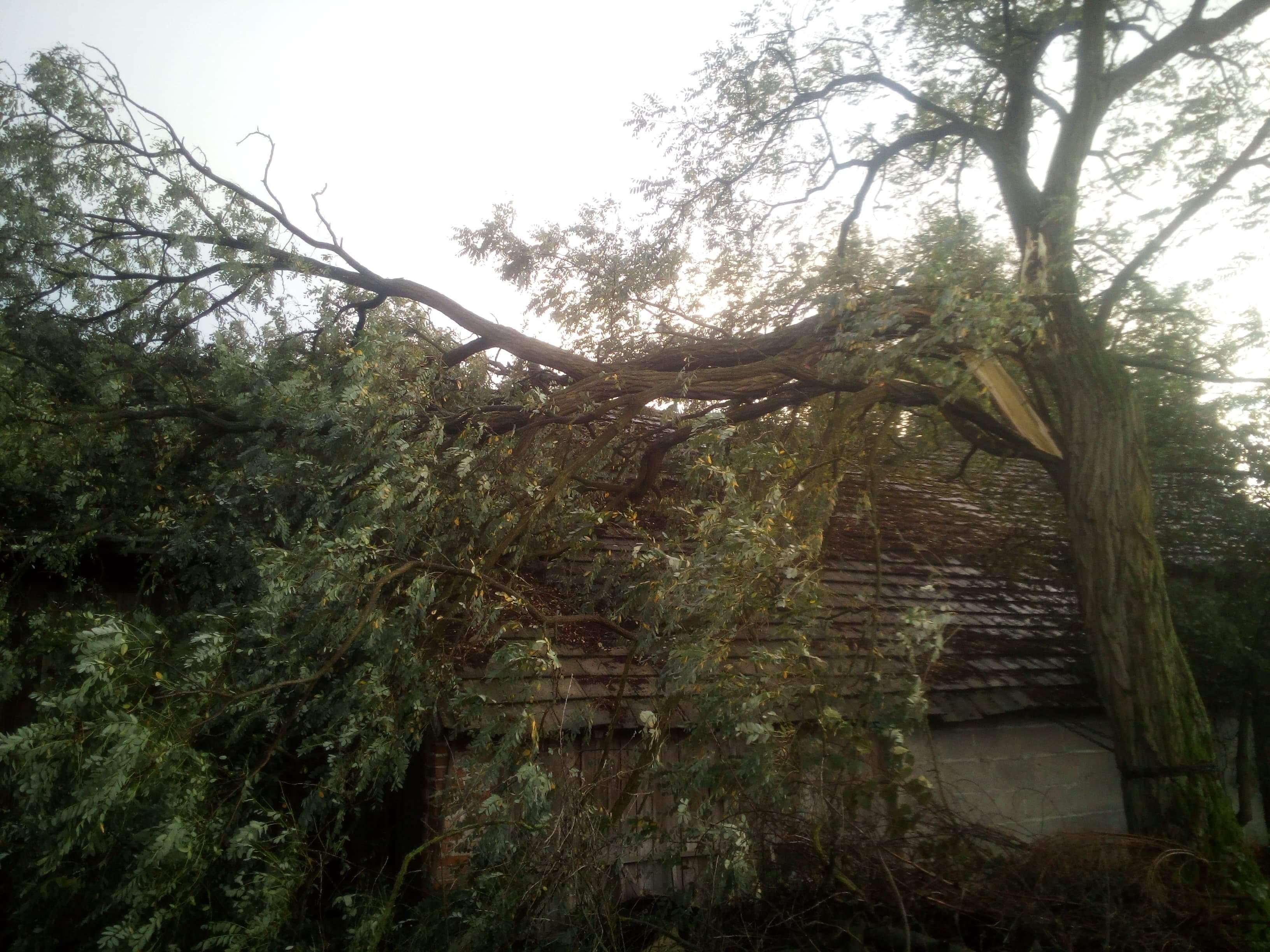 Wichura wciąż szaleje. Drzewo na dachu! - Zdjęcie główne