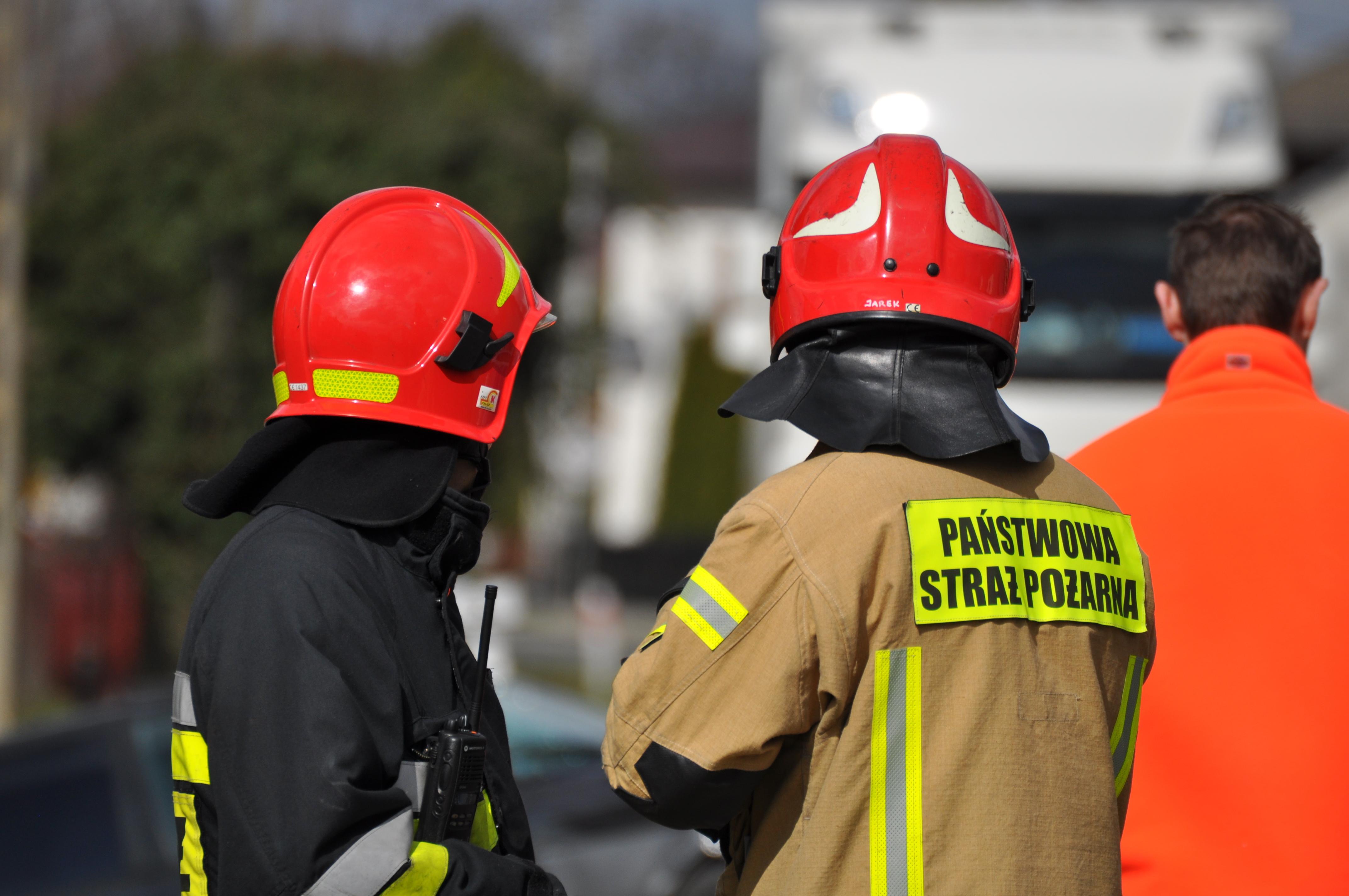 Strażacy szukali padłych dzików z ASF - Zdjęcie główne