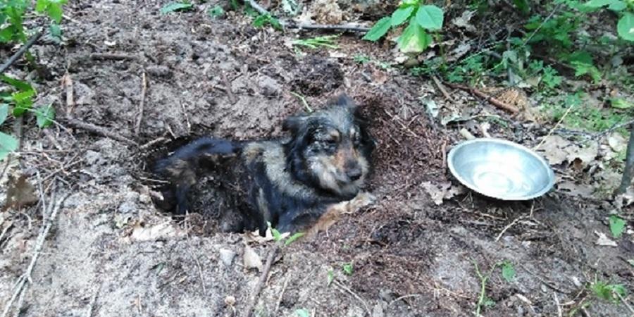 Huta Komorowska. Zakopał psa żywcem. Na miejsce jadą policjanci [ZDJĘCIE] - Zdjęcie główne
