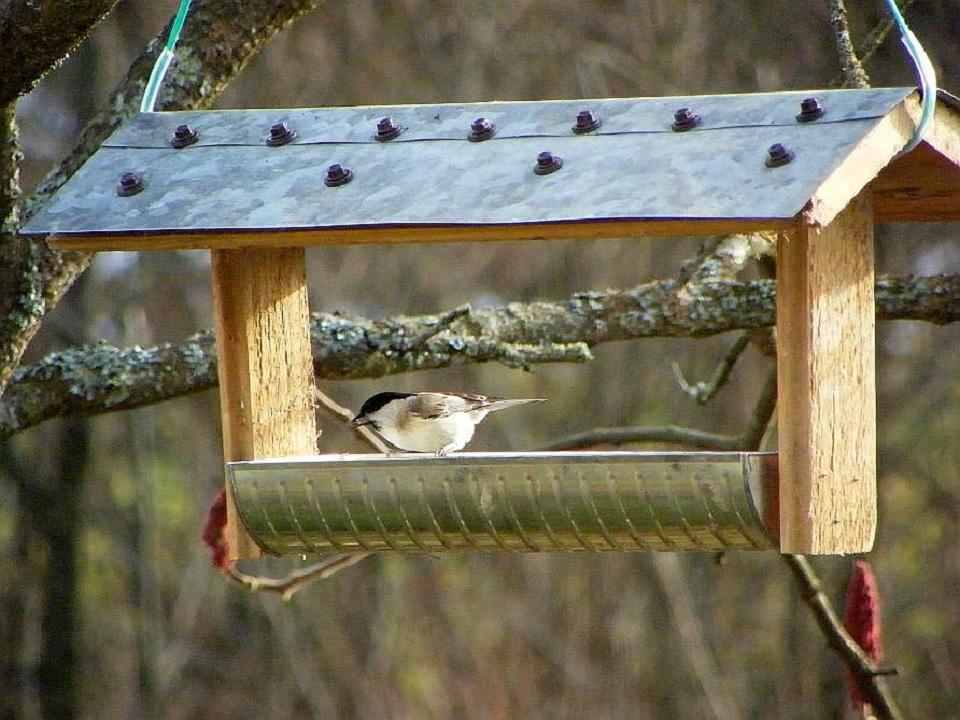 Jak dokarmiać ptaki zimą? Podpowiadamy - Zdjęcie główne
