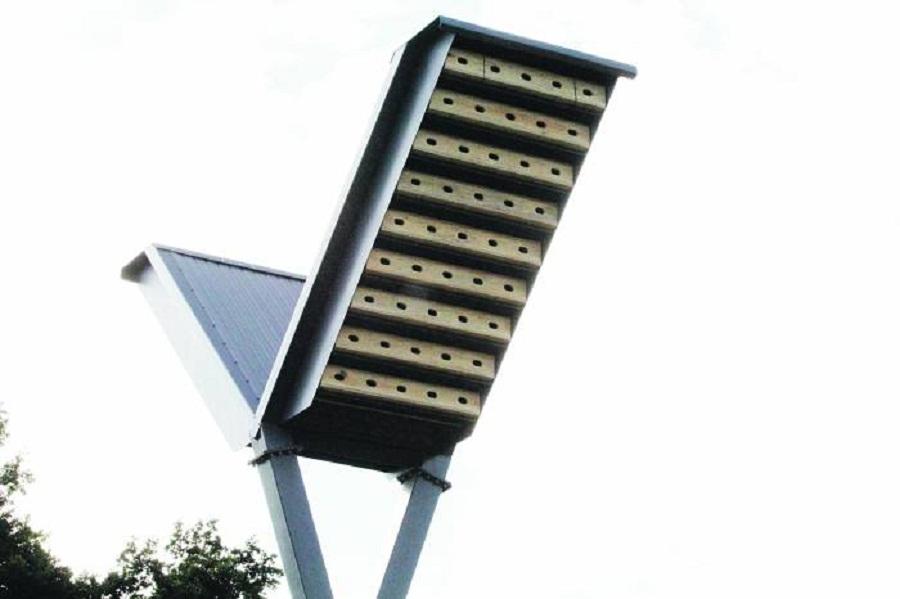 Hala i jerzyki kością niezgody  - Zdjęcie główne
