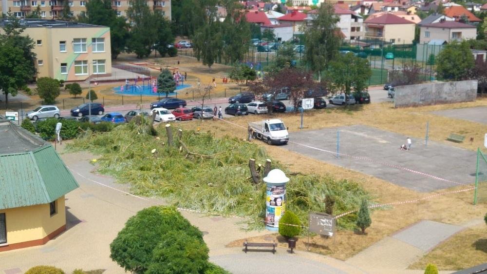 Osiedle Szafera bez drzew! Wycięto wszystkie wierzby! Alarmują czytelnicy - Zdjęcie główne