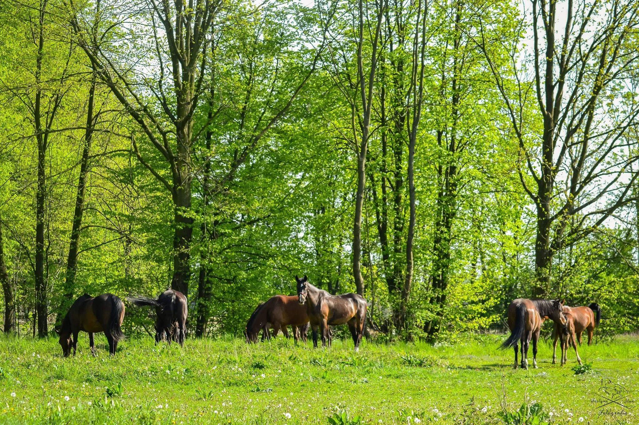 W weekend w Chorzelowie święto dla miłośników koni i jeździectwa  - Zdjęcie główne