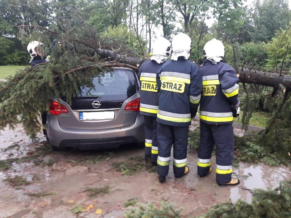 Powiał wiatr, połamał drzewa - Zdjęcie główne