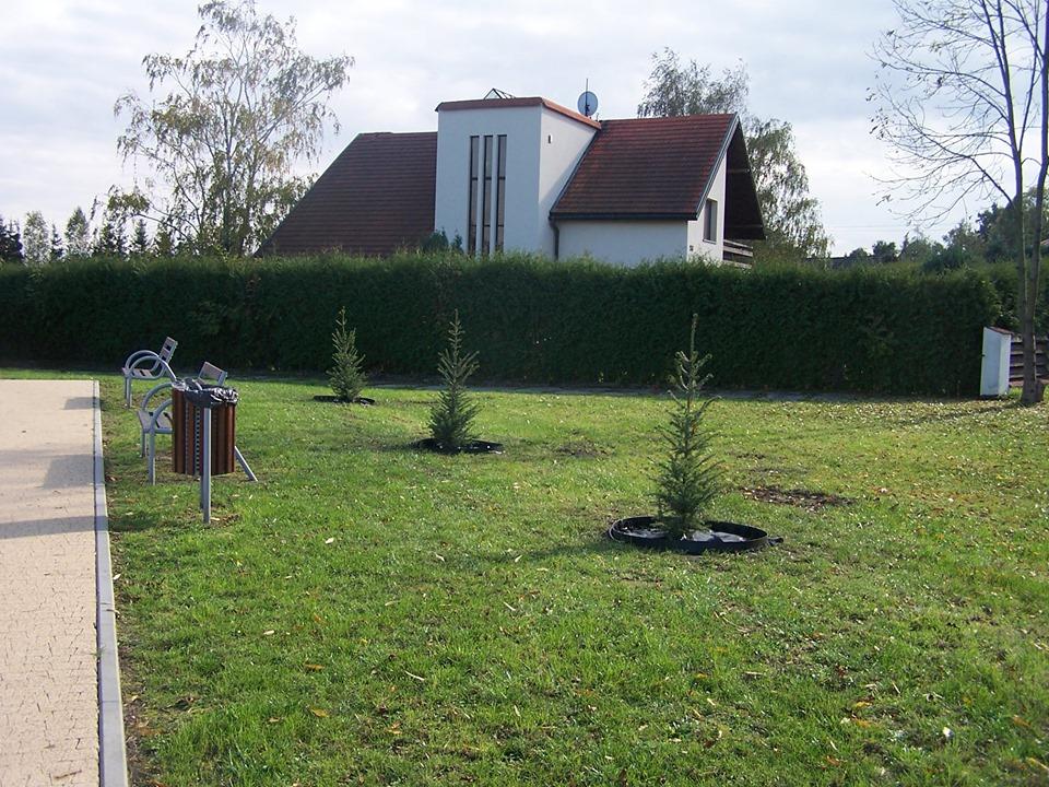 Mielec zyskał nowe drzewa - Zdjęcie główne