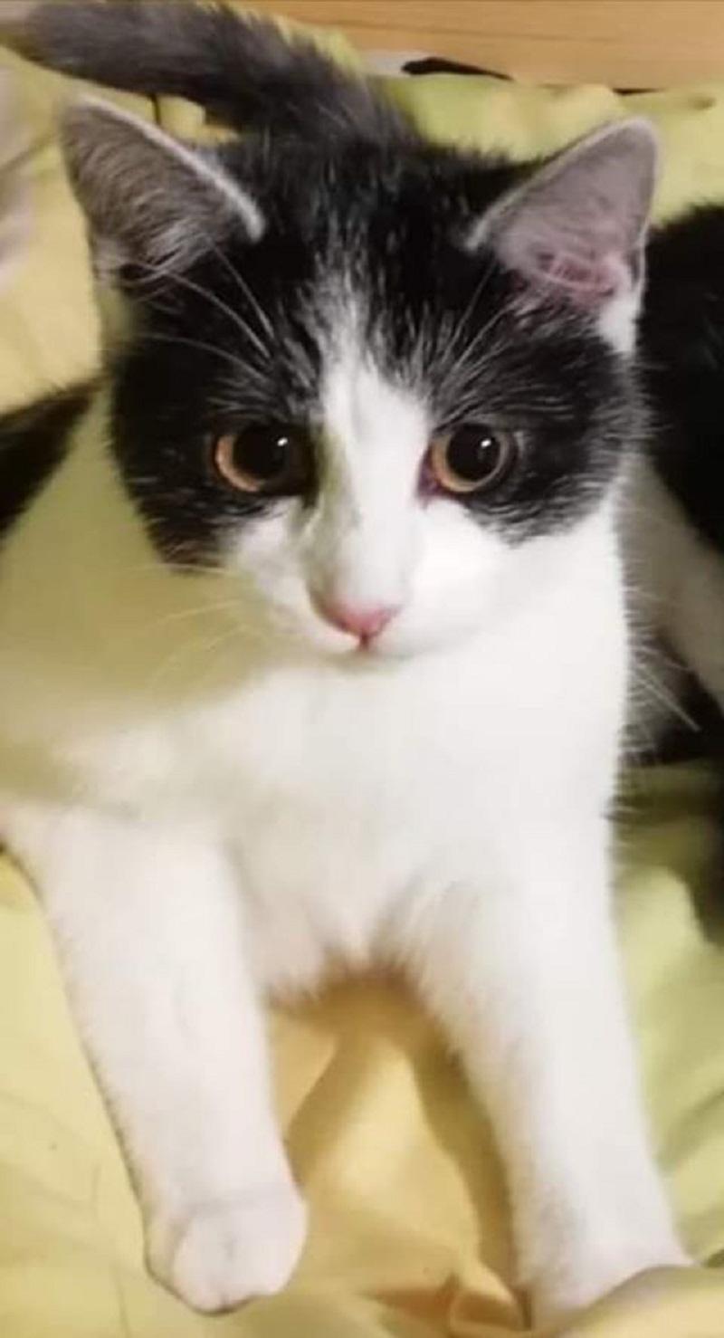 Zaginiona kotka wciąż żyje na własną łapkę - Zdjęcie główne