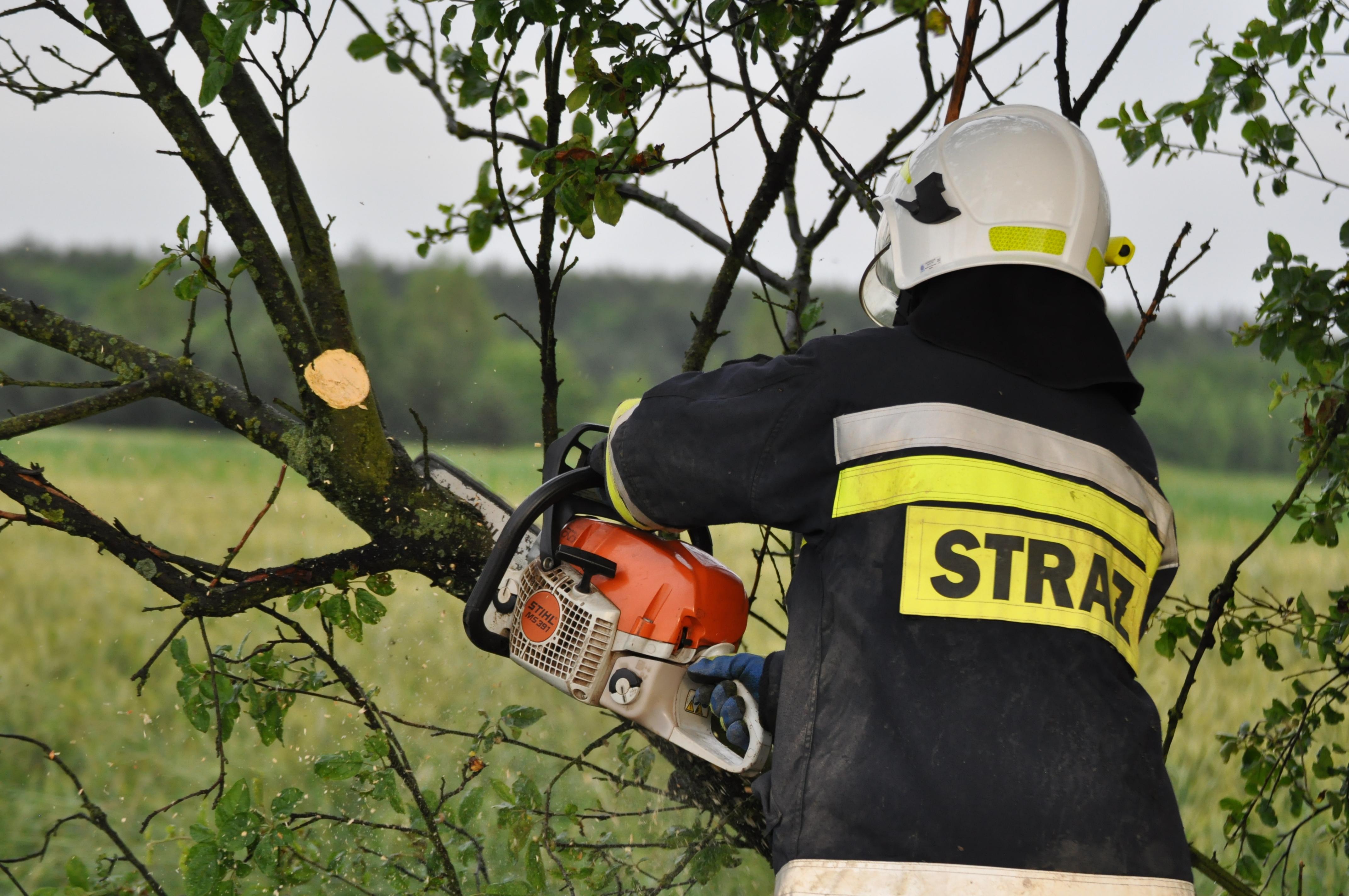 Wiatr powalił drzewo na drogę! - Zdjęcie główne
