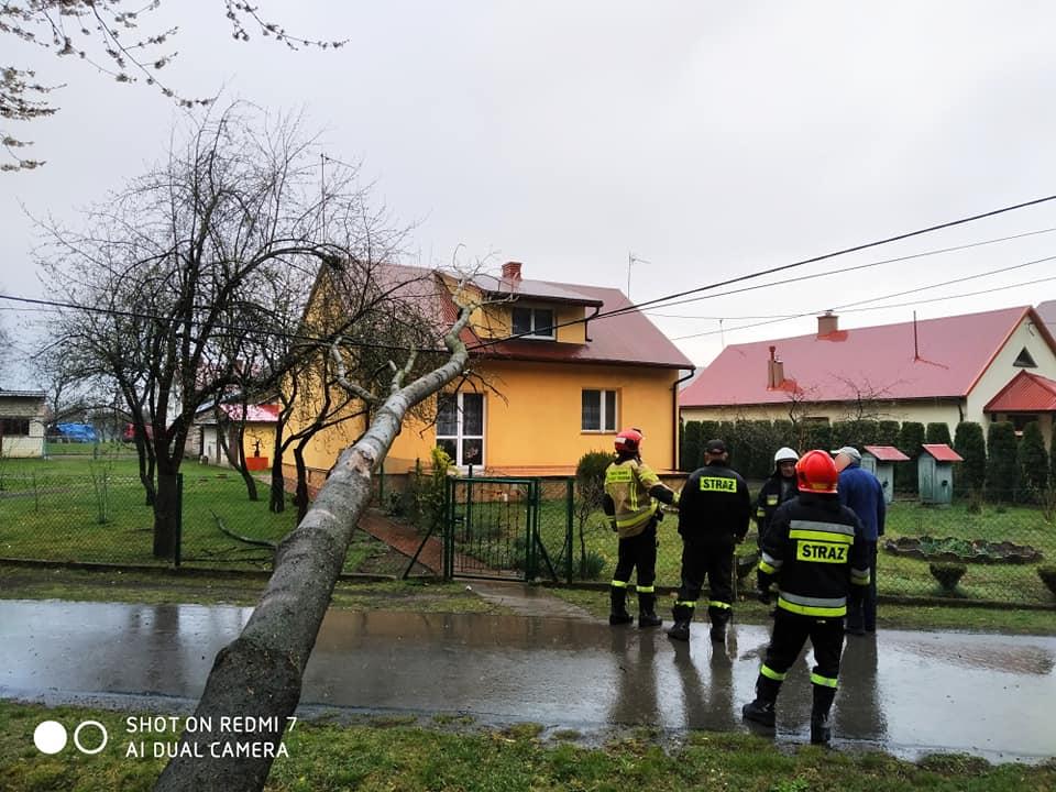 Z PODKARPACIA. Burza powaliła drzewa na linię i drogi [FOTO] - Zdjęcie główne