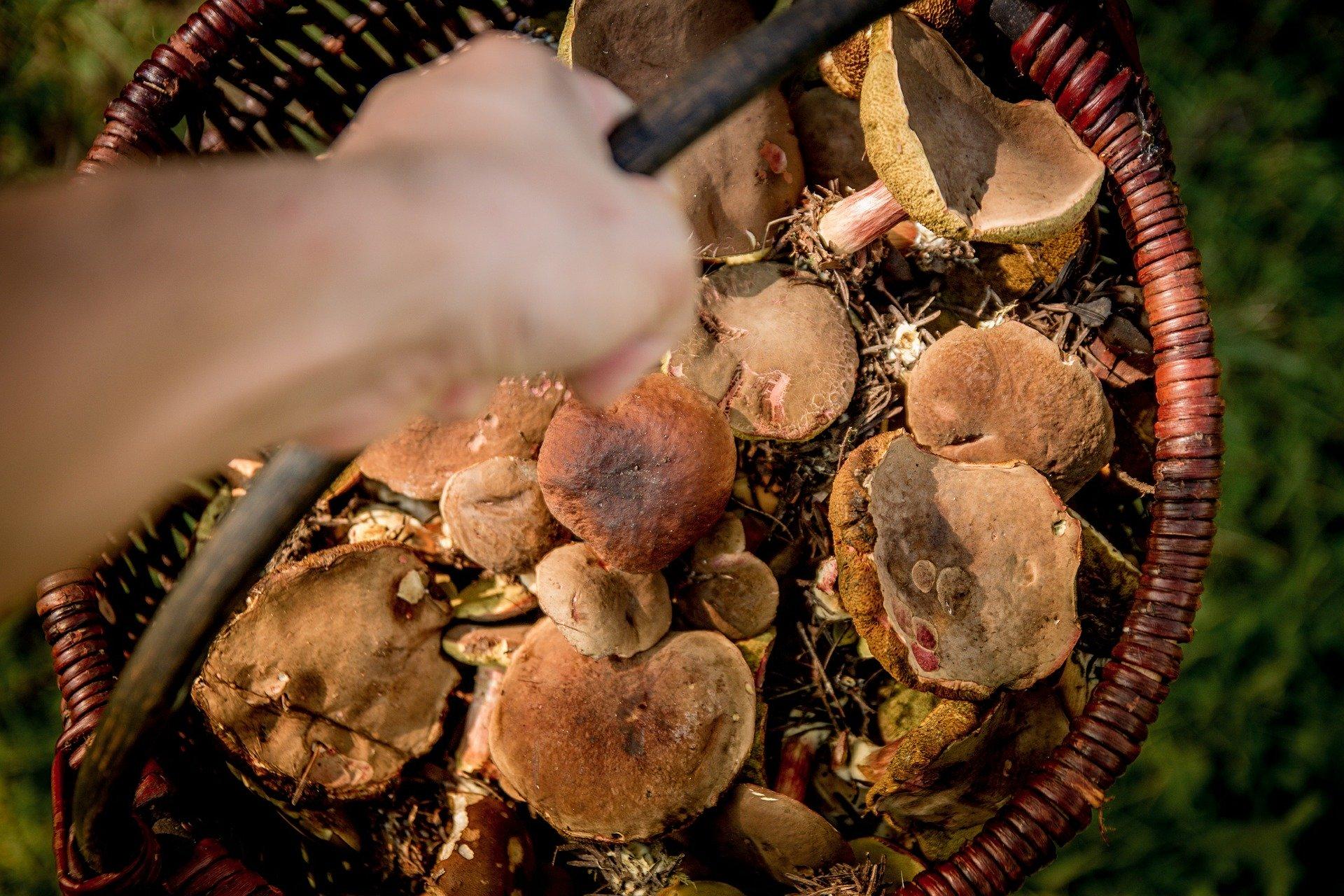Nie kupuj grzybów przy drodze. Sprzedawca musi mieć atest - Zdjęcie główne