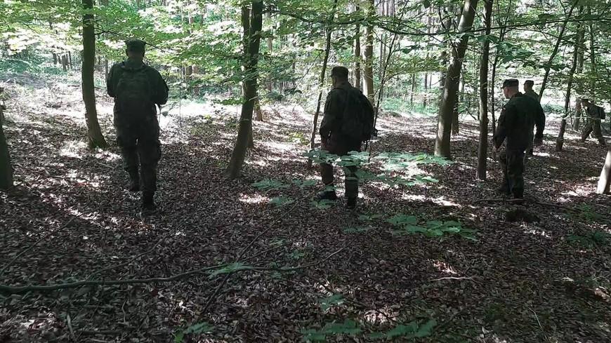 Lasy przeszukane. Znaleziono 8 martwych dzików - Zdjęcie główne