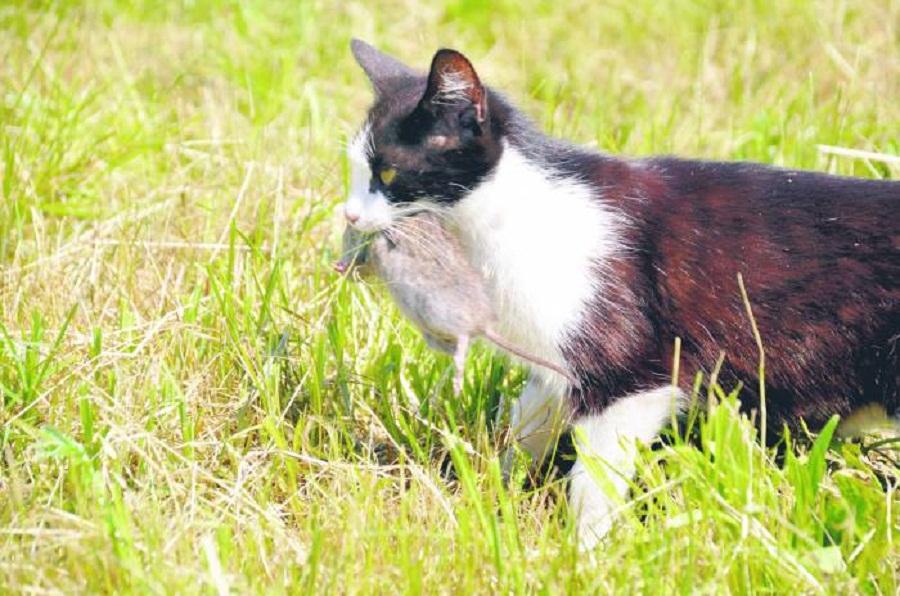 Ciemna strona zwierząt - Zdjęcie główne