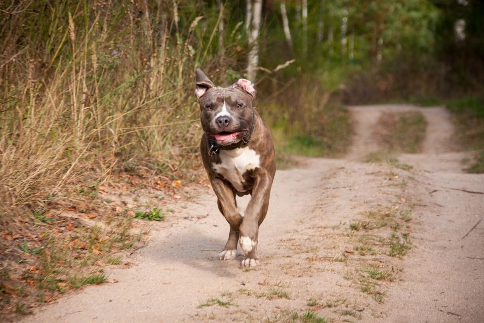 Podkarpacie. 12-latek walczy o życie po pogryzieniu przez psa - Zdjęcie główne