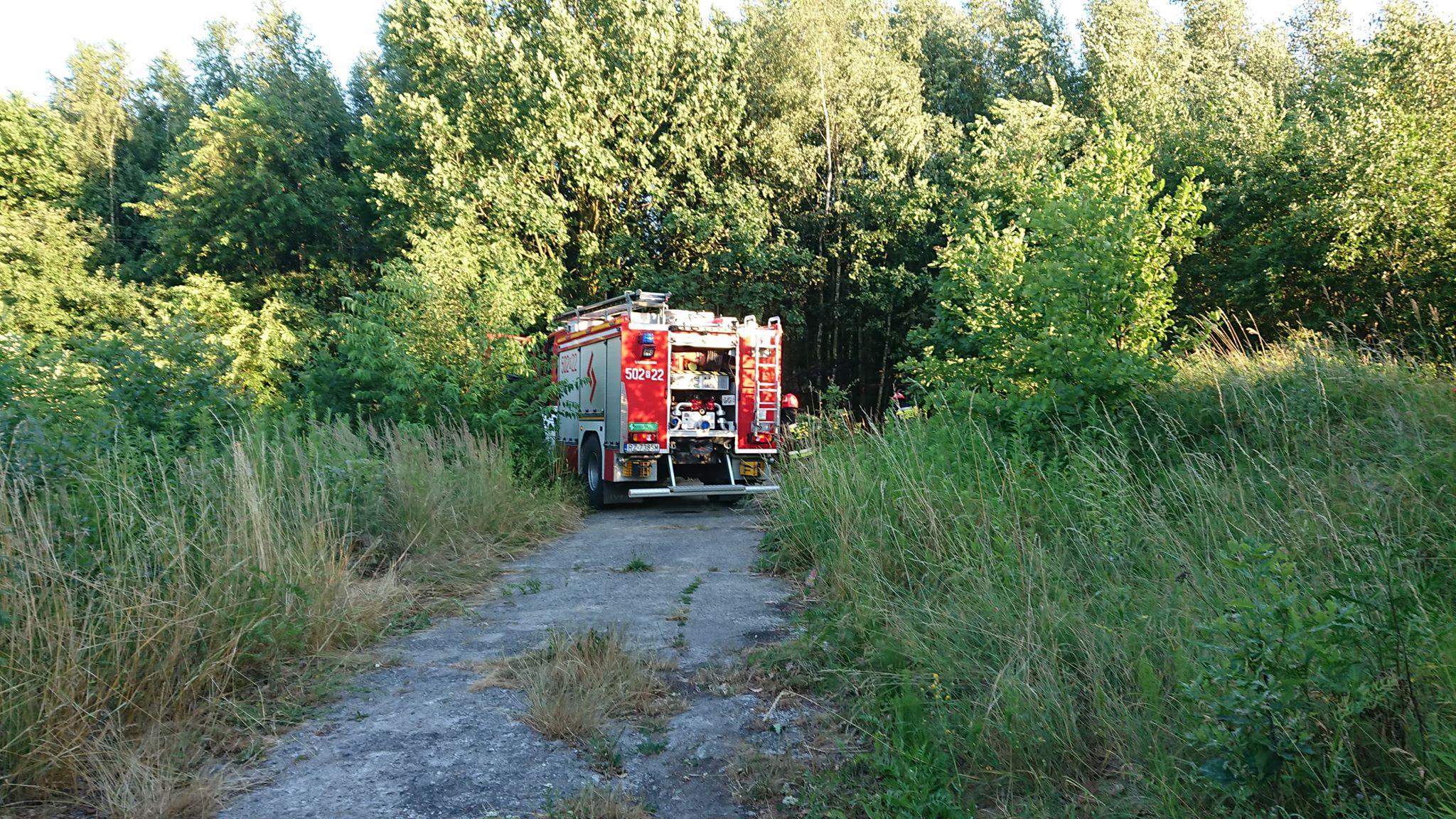 Pożar w pobliżu lasu, ogień zauważył przejeżdżający policjant [FOTO, VIDEO] - Zdjęcie główne