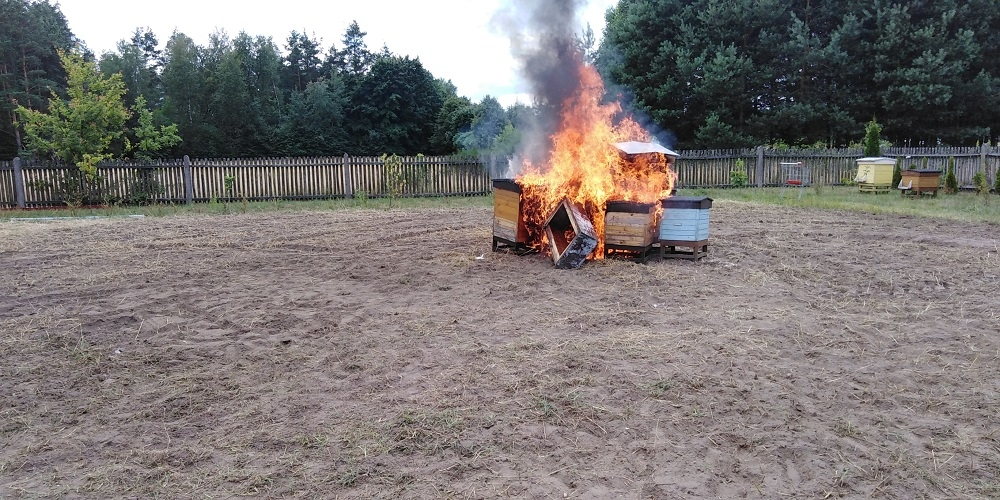 Zgnilec amerykański z Mielca dotarł do Kolbuszowej. Spalono kilka uli [ZDJĘCIA] - Zdjęcie główne