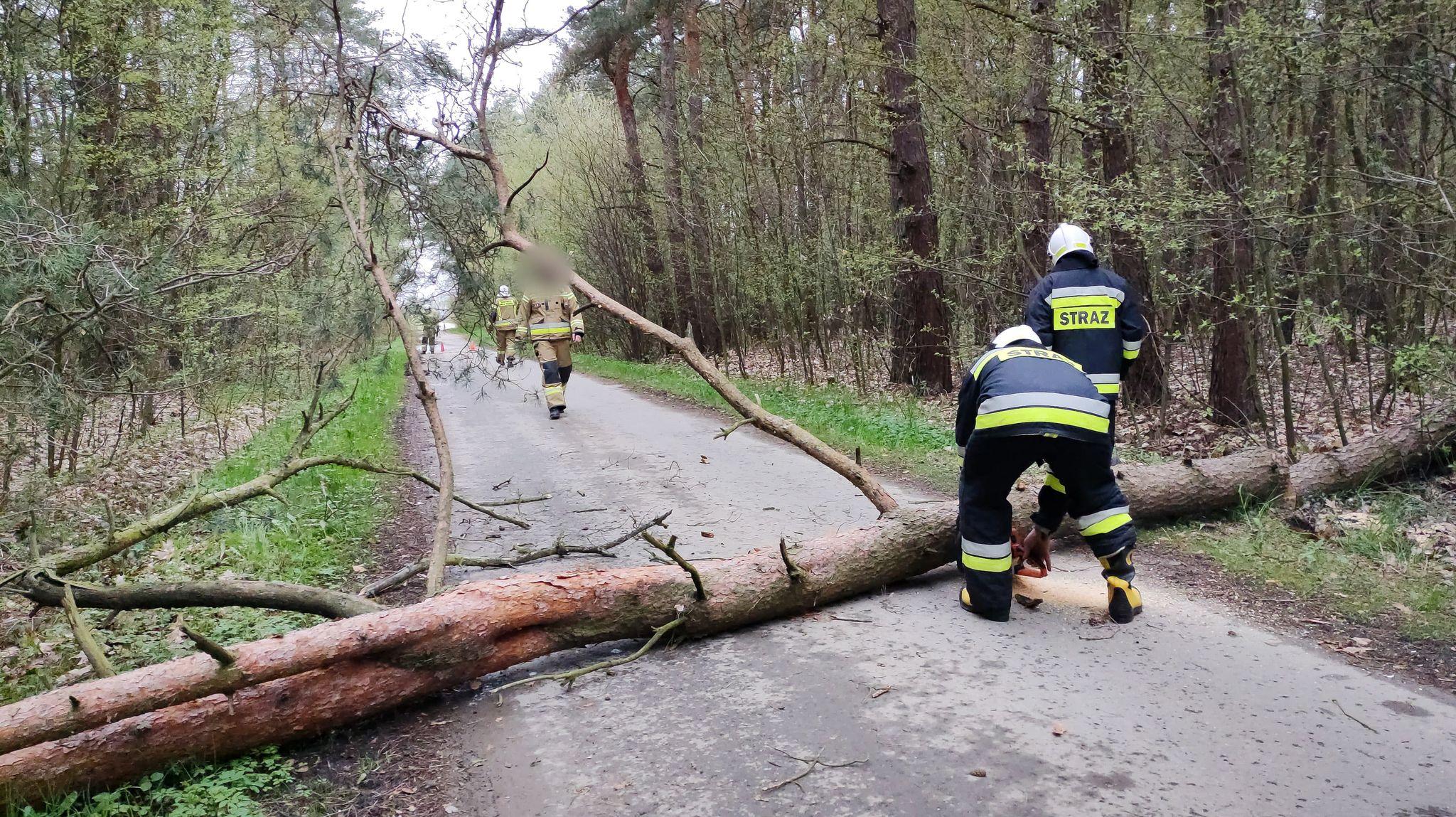 Powalone drzewo blokowało drogę [ZDJĘCIA] - Zdjęcie główne