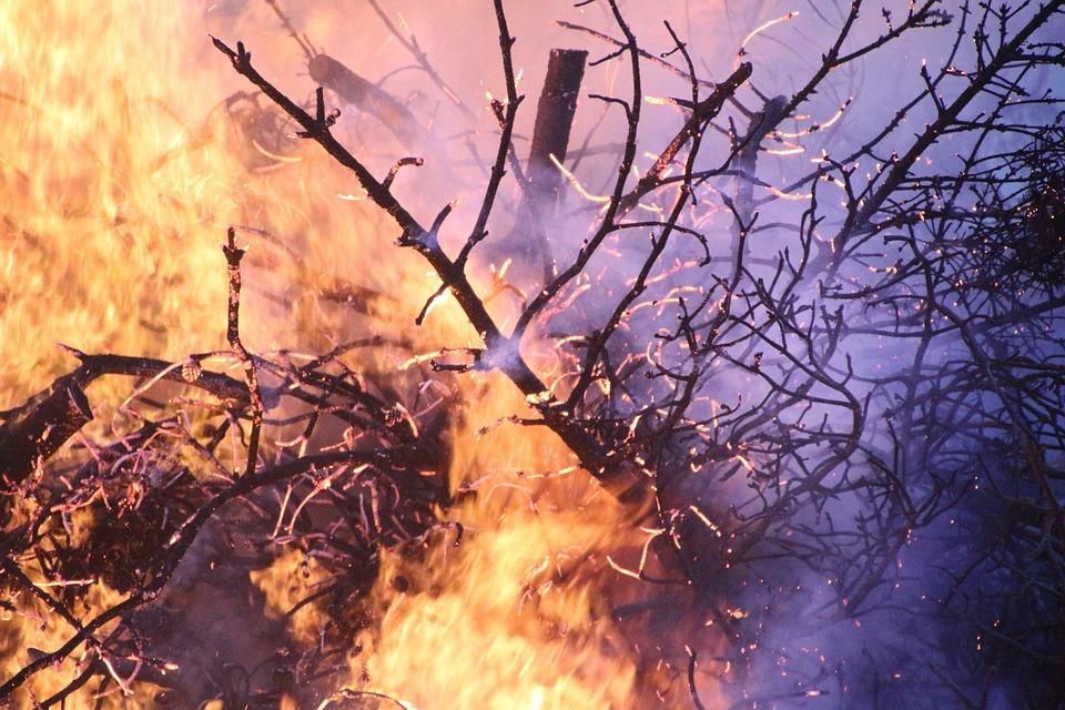 Kolejny pożar lasu. Tym razem w gminie Przecław! - Zdjęcie główne