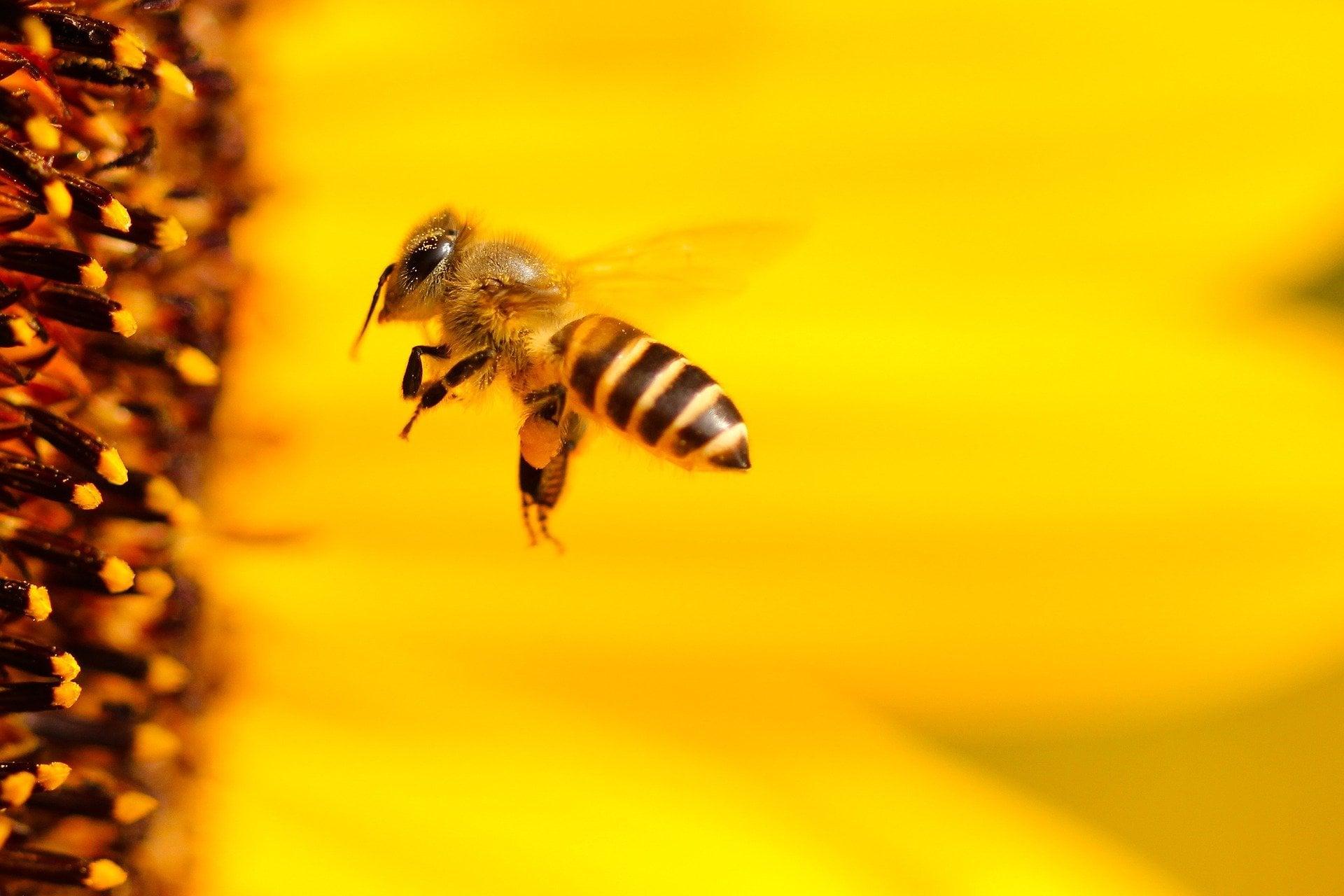 Chrońmy pszczoły. Apel do rolników i sadowników - Zdjęcie główne
