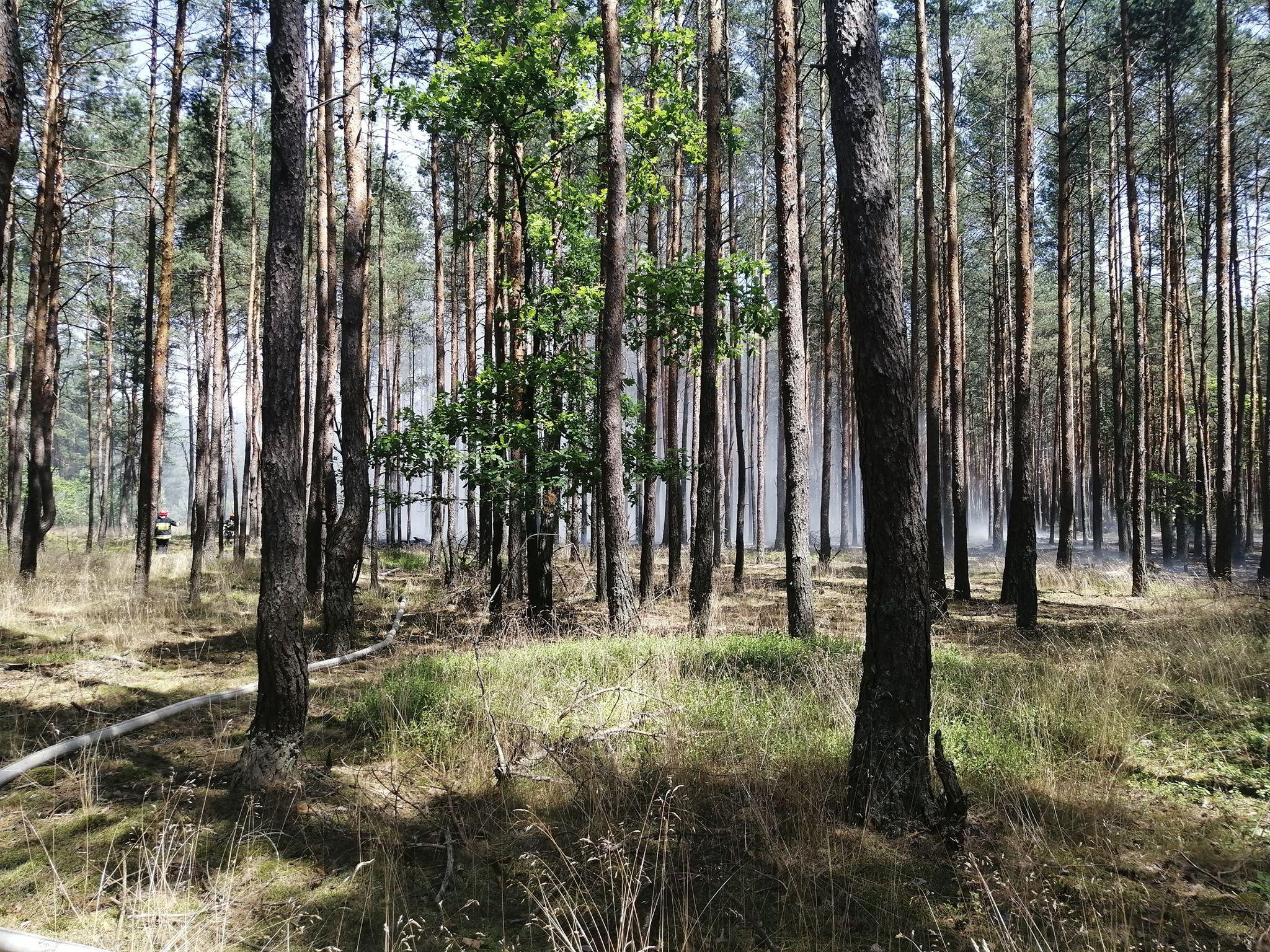 Pożar lasu w gminie Tuszów Narodowy. Trwa akcja gaśnicza! - Zdjęcie główne
