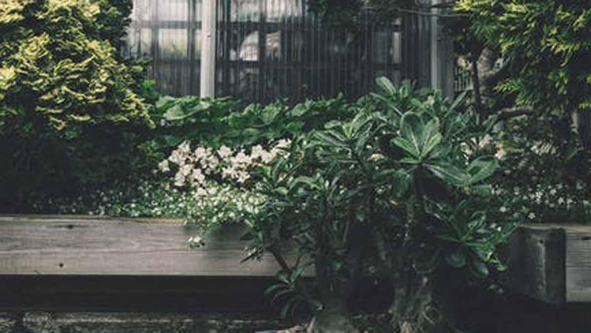 Roślina ozdobna miskant - samodzielna uprawa w ogrodzie - Zdjęcie główne