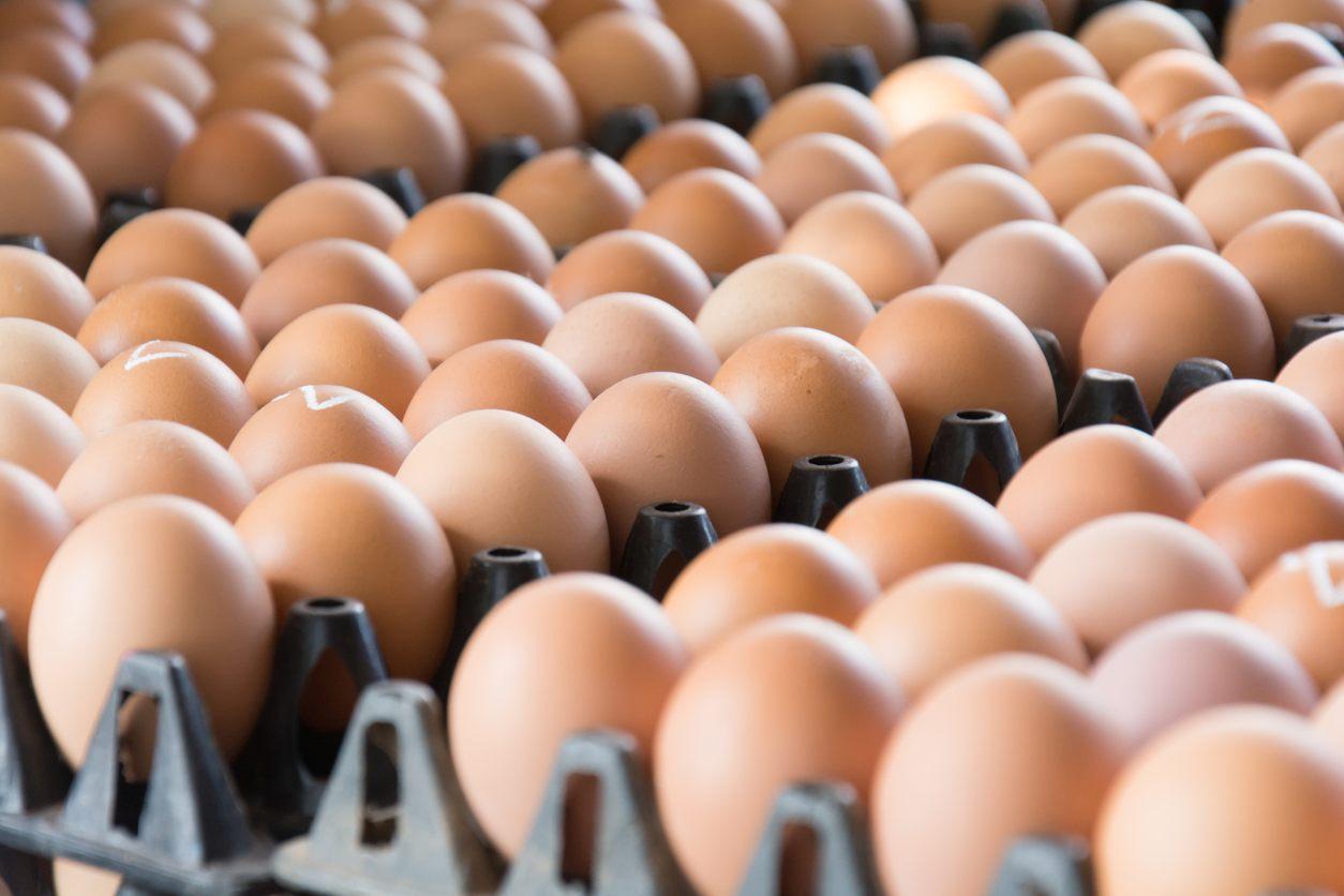 Jajka z salmonellą. Uważajcie w trakcie zakupów - Zdjęcie główne